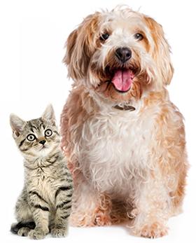 Dog and cat sitting: Animal Hospital in Waynesboro