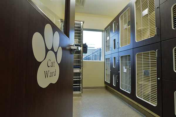 Cat ward: Photo Gallery in Waynesboro