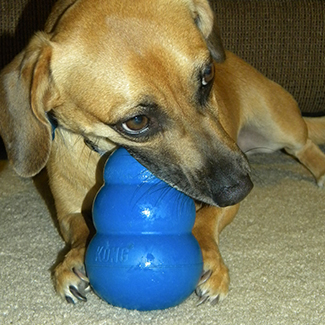 dog chewing on blue toy: Pet Dental Care in Waynesboro