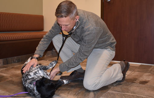 Vet listening to a dog's breathing: Pet Vaccinations in Waynesboro
