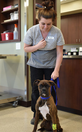 Vet tech with a dog: Pet Vaccinations in Waynesboro