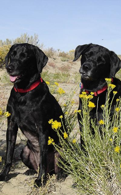 Two dogs sitting outside: Helpful Links in Waynesboro