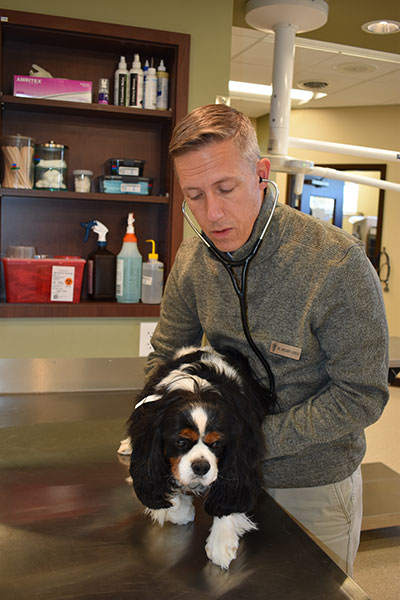 Vet listening to a dog's breathing: AAHA Accredited in Waynesboro