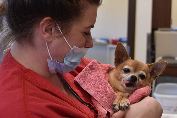 Vet holding a small dog: Pet Surgery in Waynesboro