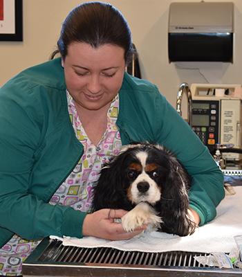 Veterinarian examining a dog during pet diagnostics