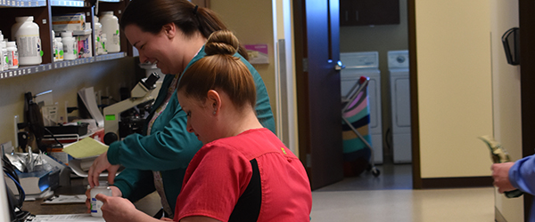 Veterinarians working on pet diagnostics in the in house lab