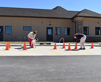 Outdoor physical therapy: Pet Rehabilitation in Waynesboro